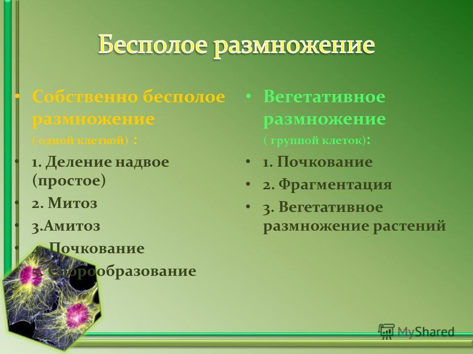 Собственно бесполое размножение ( одной клеткой) : 1. Деление надвое (простое) 2. Митоз 3.Амитоз 4. Почкование 5. Спорообразование Вегетативное размножение ( группой клеток) : 1. Почкование 2. Фрагментация 3. Вегетативное размножение растений