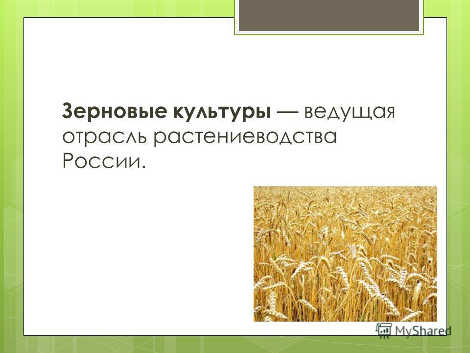 Основные районы выращивания ржи 86