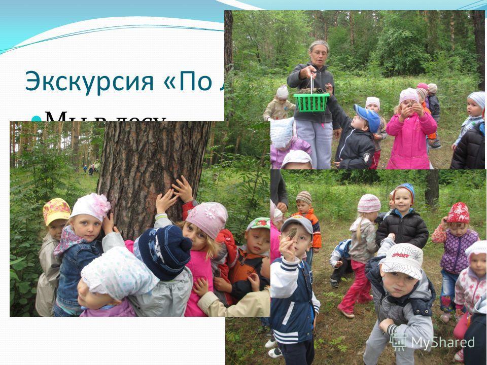 Экскурсия «По лесной тропинке» Мы в лесу гуляли, Шишки собирали.