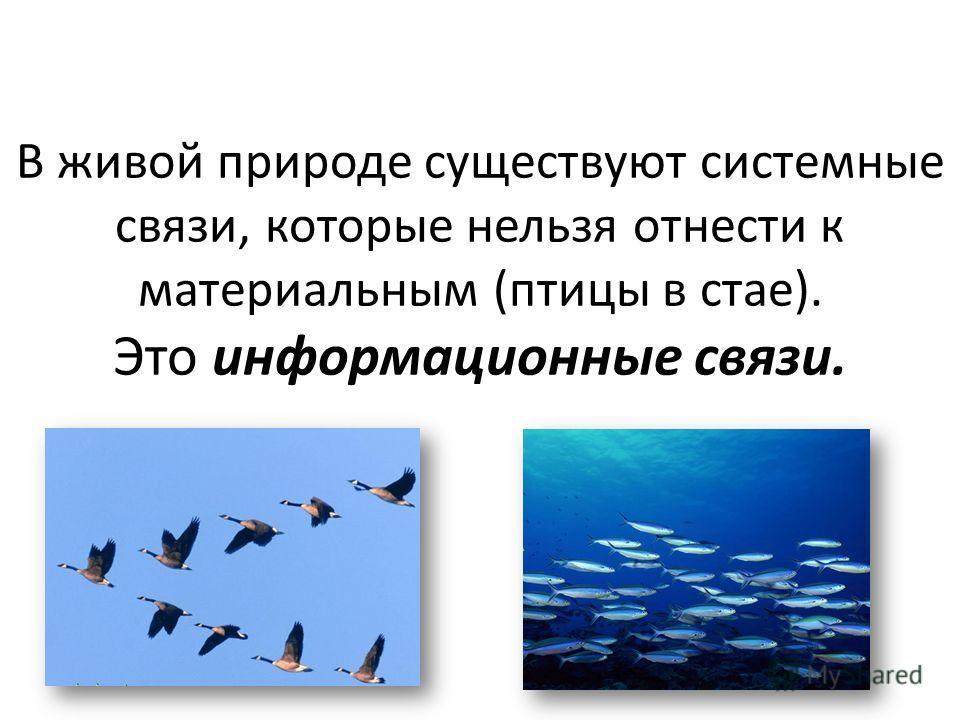 В живой природе существуют системные связи, которые нельзя отнести к материальным (птицы в стае). Это информационные связи.