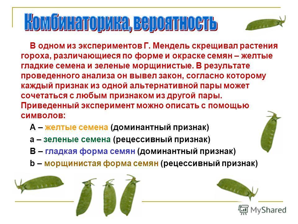 В одном из экспериментов Г. Мендель скрещивал растения гороха, различающиеся по форме и окраске семян – желтые гладкие семена и зеленые морщинистые. В результате проведенного анализа он вывел закон, согласно которому каждый признак из одной альтернат