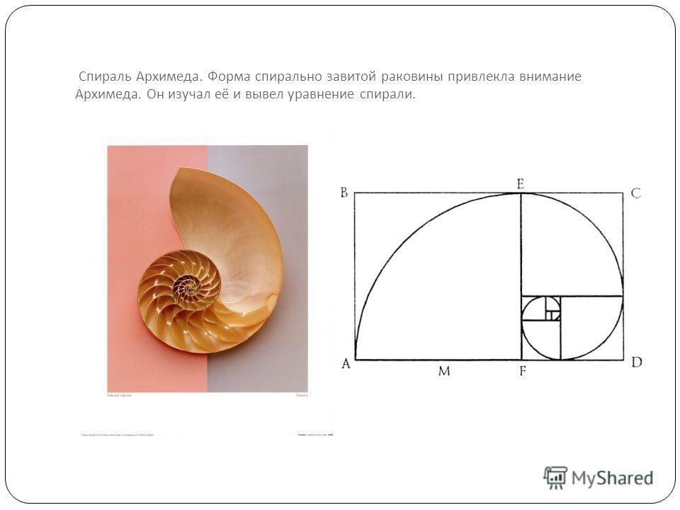 Спираль Архимеда. Форма спирально завитой раковины привлекла внимание Архимеда. Он изучал её и вывел уравнение спирали.