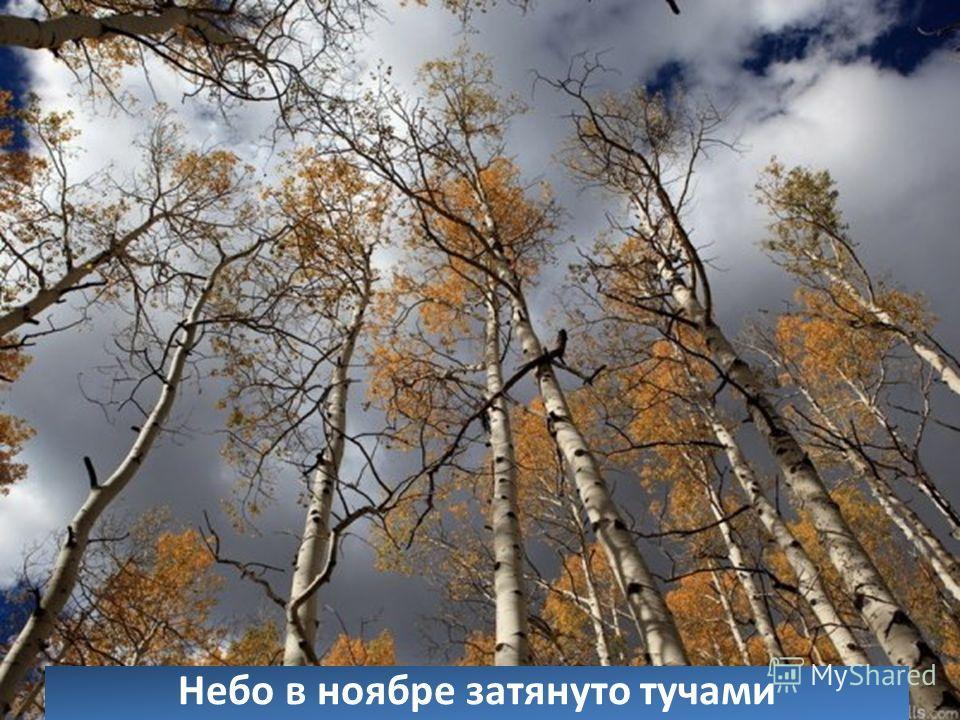 Небо в ноябре затянуто тучами