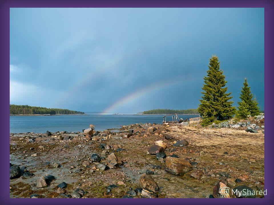 Приезжая в Карелию любой человек очаровывается красотой природы: голубизной озер, окаймленных еловым частоколом, соснами, цепляющимися корнями за камни невообразимым способом, белоснежными чайками на фоне синего неба… И практически никто не задумывае