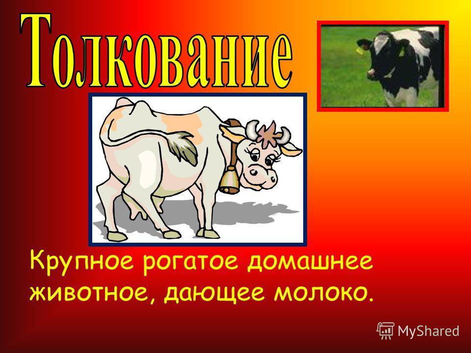 Крупное рогатое домашнее животное, дающее молоко.