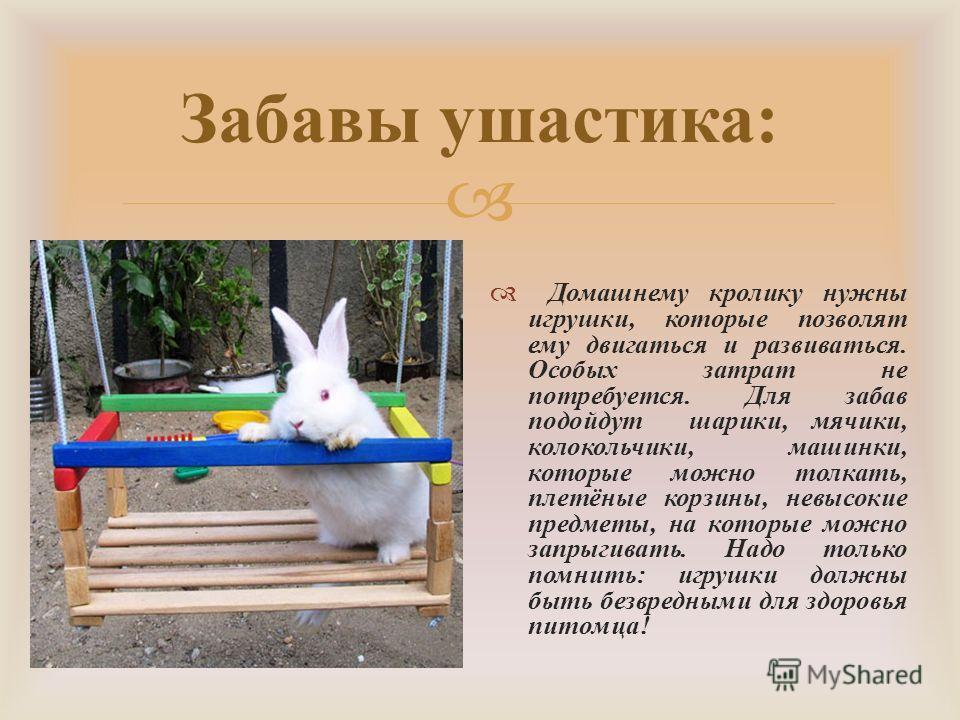 Домашнему кролику нужны игрушки, которые позволят ему двигаться и развиваться. Особых затрат не потребуется. Для забав подойдут шарики, мячики, колокольчики, машинки, которые можно толкать, плетёные корзины, невысокие предметы, на которые можно запры