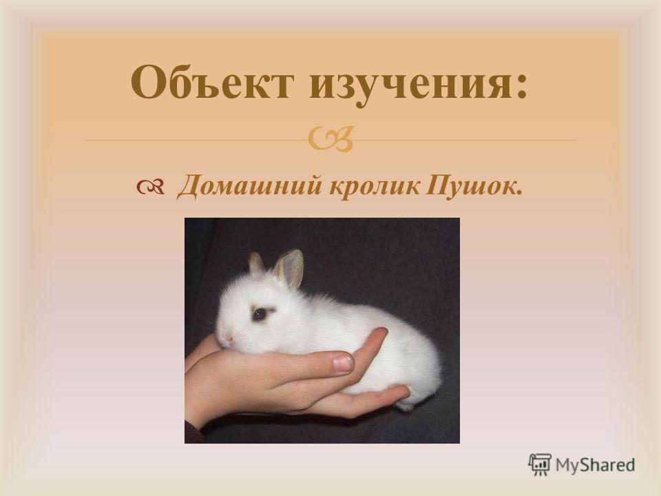 Домашний кролик Пушок. Объект изучения :