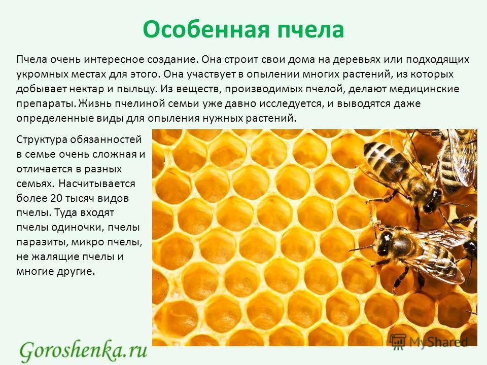 Особенная пчела Пчела очень интересное создание. Она строит свои дома на деревьях или подходящих укромных местах для этого. Она участвует в опылении многих растений, из которых добывает нектар и пыльцу. Из веществ, производимых пчелой, делают медицин