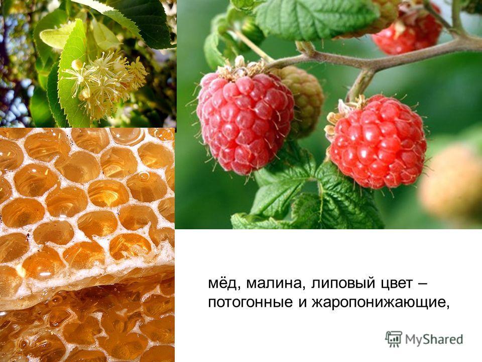мёд, малина, липовый цвет – потогонные и жаропонижающие,