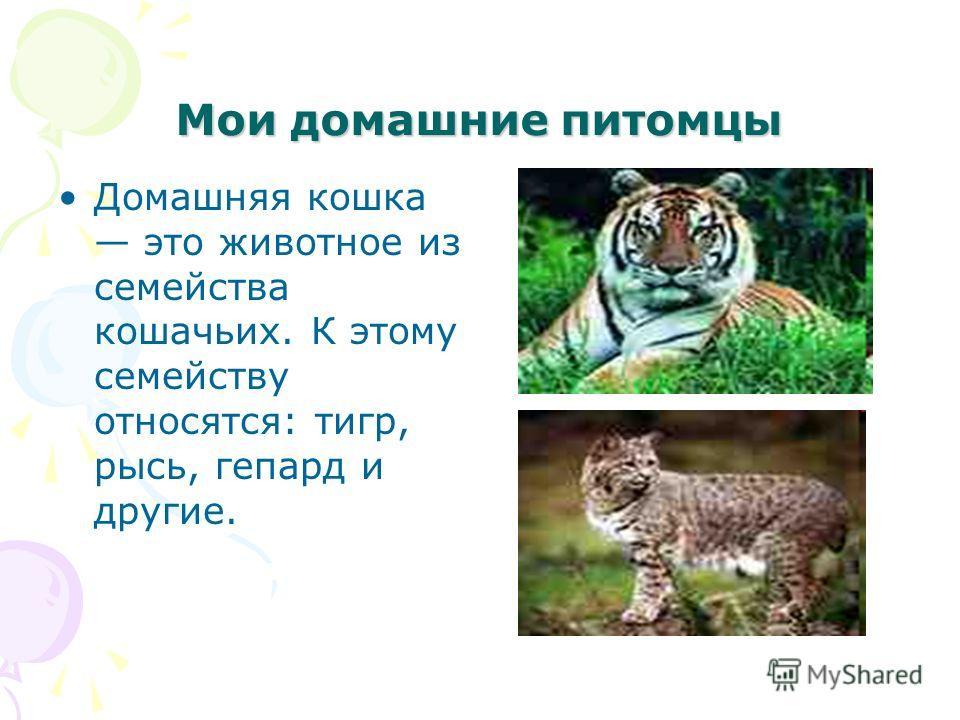 Мои домашние питомцы Домашняя кошка это животное из семейства кошачьих. К этому семейству относятся: тигр, рысь, гепард и другие.