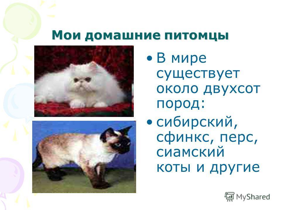 Мои домашние питомцы В мире существует около двухсот пород: сибирский, сфинкс, перс, сиамский коты и другие