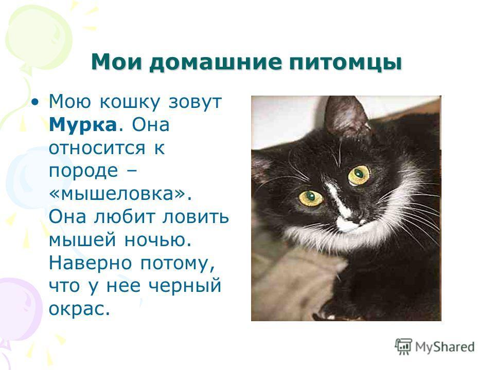 Мои домашние питомцы Мою кошку зовут Мурка. Она относится к породе – «мышеловка». Она любит ловить мышей ночью. Наверно потому, что у нее черный окрас.