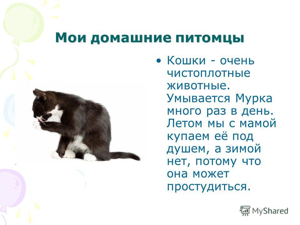 Мои домашние питомцы Кошки - очень чистоплотные животные. Умывается Мурка много раз в день. Летом мы с мамой купаем её под душем, а зимой нет, потому что она может простудиться.