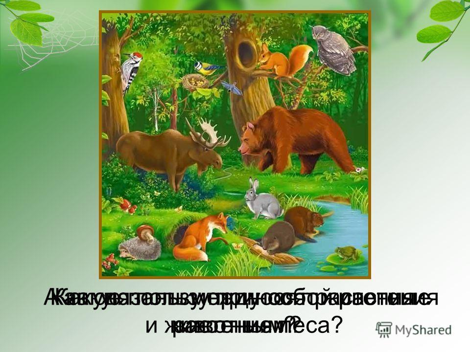 растения и животные леса?