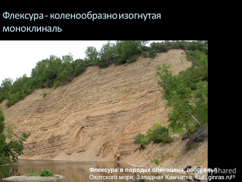 Геологи-2013- л-6 19 Флексура - коленообразно изогнутая моноклиналь Флексура в породах олигоцена, побережье Охотского моря, Западная Камчатка. ftlab.ginras.ru