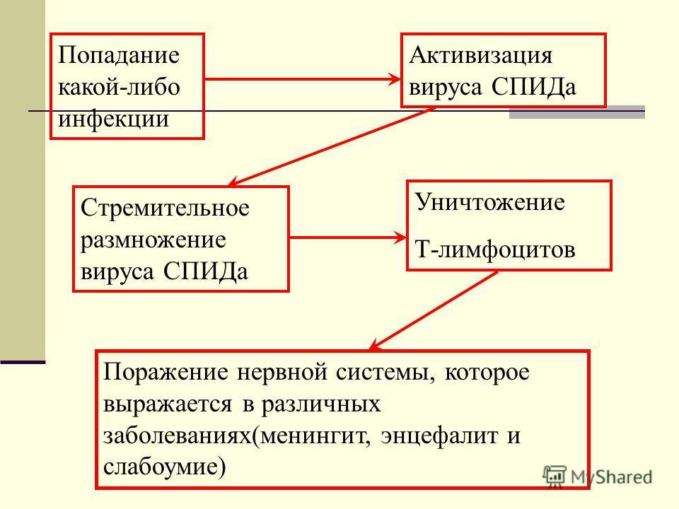 Попадание какой-либо инфекции Активизация вируса СПИДа Стремительное размножение вируса СПИДа Уничтожение Т-лимфоцитов Поражение нервной системы, которое выражается в различных заболеваниях(менингит, энцефалит и слабоумие)