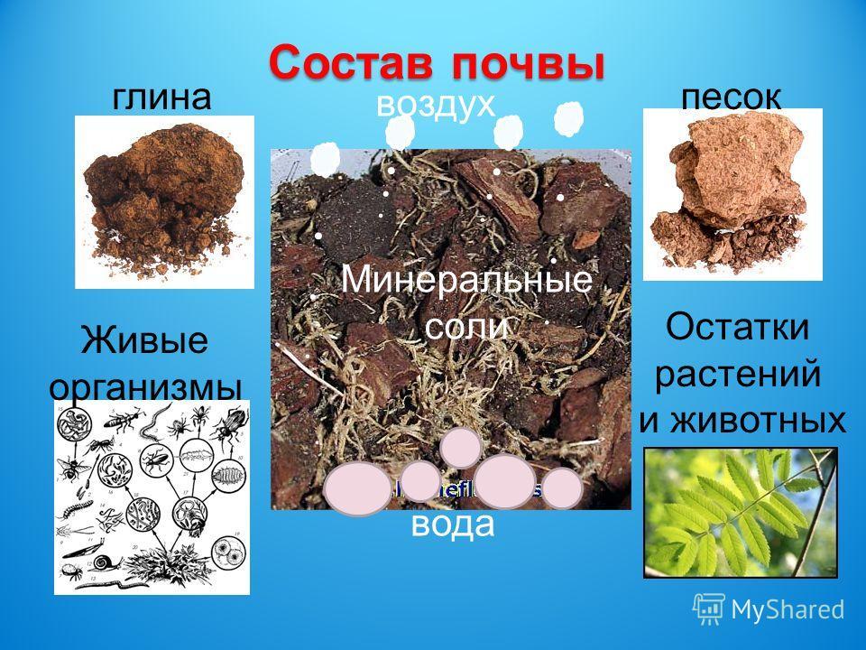 глинапесок Живые организмы Остатки растений и животных вода воздух Минеральные соли