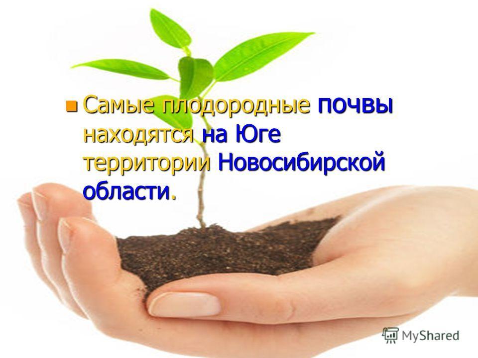 n Самые плодородные почвы находятся на Юге территории Новосибирской области.