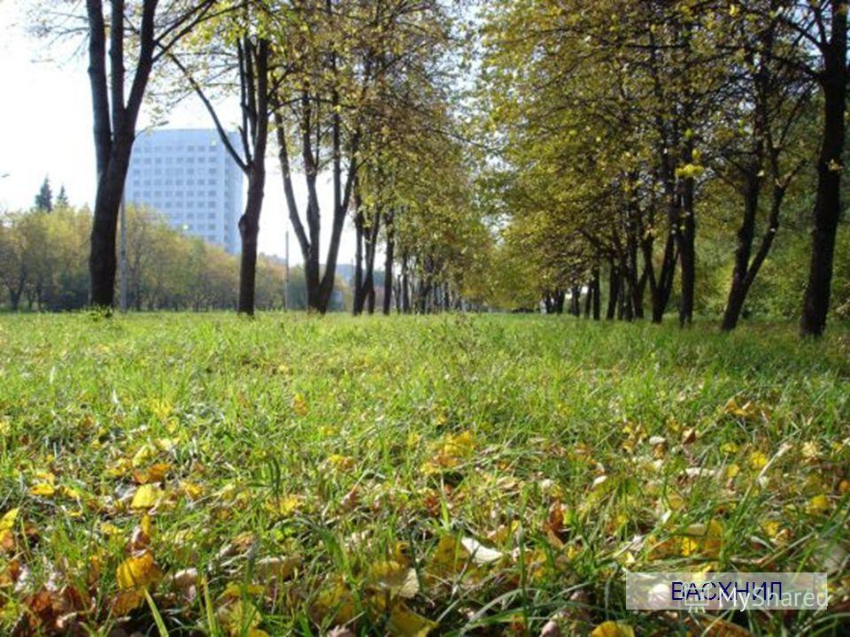n И немного о красоте Новосибирской области… ВАСХНИЛ