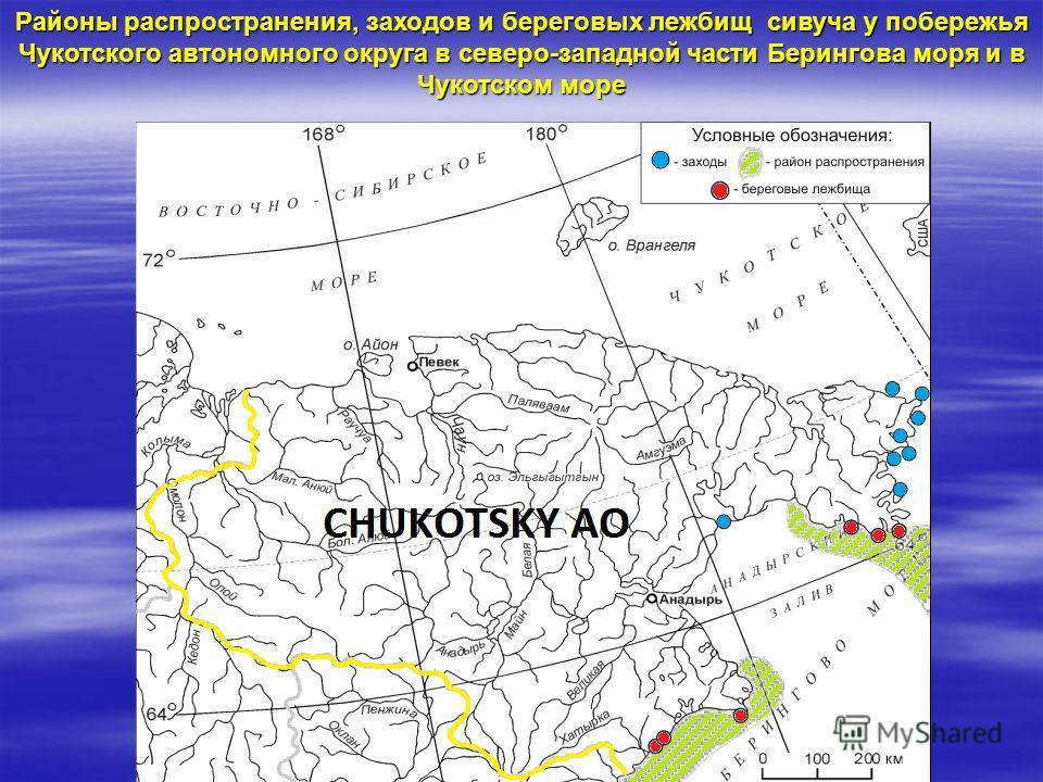 Районы распространения, заходов и береговых лежбищ сивуча у побережья Чукотского автономного округа в северо-западной части Берингова моря и в Чукотском море