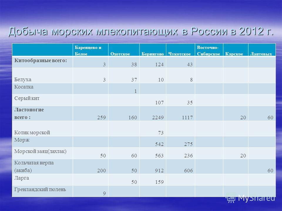 Добыча морских млекопитающих в России в 2012 г. Баренцево и БелоеОхотскоеБеринговоЧукотское Восточно- СибирскоеКарскоеЛаптевых Китообразные всего: 33812443 Белуха 337108 Косатка 1 Серый кит 10735 Ластоногие всего : 259160224911172060 Котик морской 73