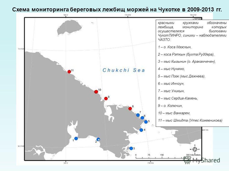 Схема мониторинга береговых лежбищ моржей на Чукотке в 2009-2013 гг. красными кружками обозначены лежбища, мониторинг которых осуществлялся биологами ЧукотТИНРО, синими – наблюдателями ЧАЗТО: 1 – о. Коса Мээскын, 2 – коса Рэткын (бухта Руддера), 3 –