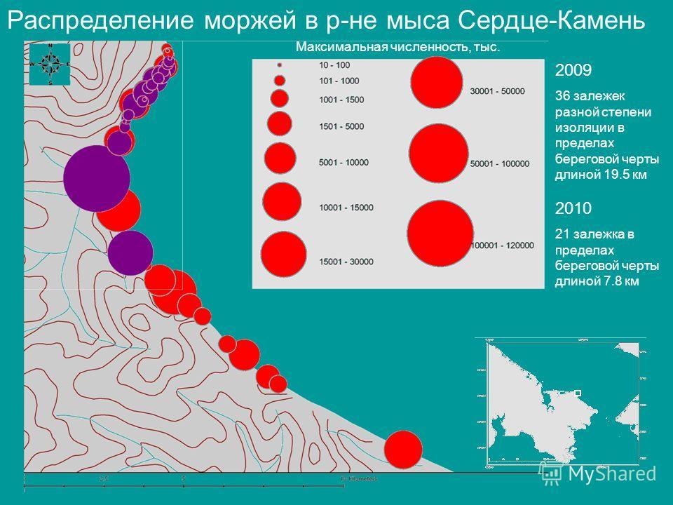 Распределение моржей в р-не мыса Сердце-Камень 2009 36 залежек разной степени изоляции в пределах береговой черты длиной 19.5 км Максимальная численность, тыс. 2010 21 залежка в пределах береговой черты длиной 7.8 км
