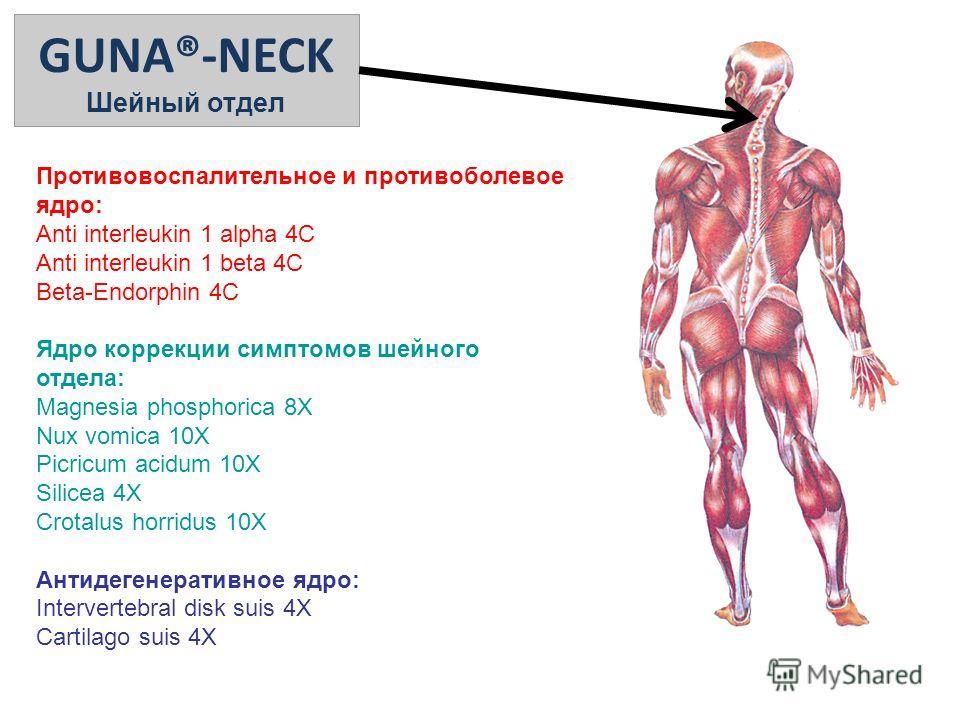 GUNA®-NECK Шейный отдел Противовоспалительное и противоболевое ядро: Anti interleukin 1 alpha 4C Anti interleukin 1 beta 4C Beta-Endorphin 4C Ядро коррекции симптомов шейного отдела: Magnesia phosphorica 8X Nux vomica 10X Picricum acidum 10X Silicea