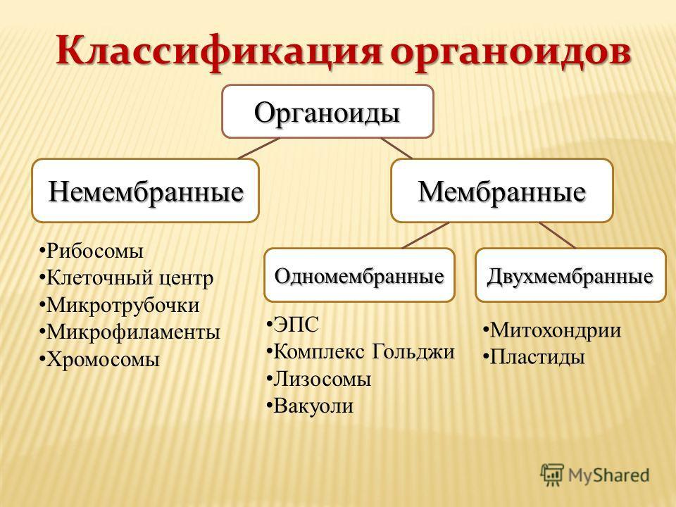 Классификация органоидов Митохондрии Пластиды ЭПС Комплекс Гольджи Лизосомы Вакуоли Органоиды НемембранныеМембранные ОдномембранныеДвухмембранные Рибосомы Клеточный центр Микротрубочки Микрофиламенты Хромосомы