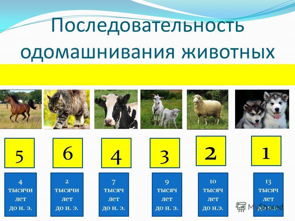 Последовательность одомашнивания животных 5 6 4 3 2 1 4 тысячи лет до н. э. 2 тысячи лет до н. э. 7 тысяч лет до н. э. 9 тысяч лет до н. э. 10 тысяч лет до н.э. 13 тысяч лет до н.э.