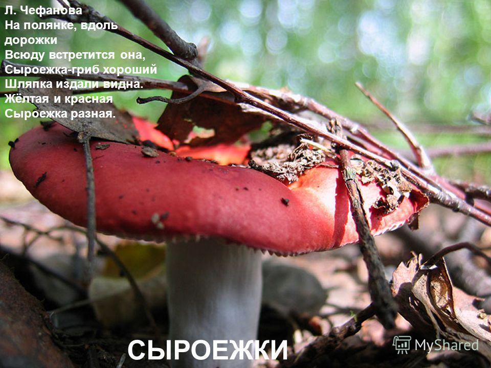 Л. Чефанова На полянке, вдоль дорожки Всюду встретится она, Сыроежка-гриб хороший Шляпка издали видна. Жёлтая и красная Сыроежка разная. СЫРОЕЖКИ