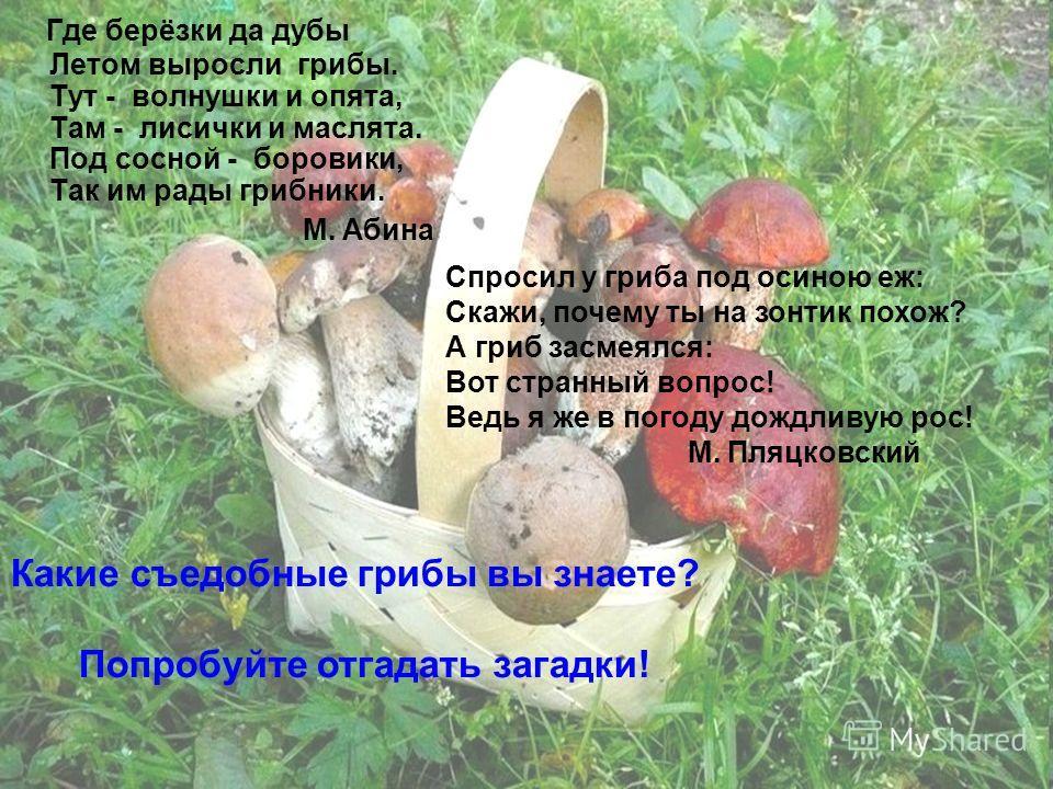 Где берёзки да дубы Летом выросли грибы. Тут - волнушки и опята, Там - лисички и маслята. Под сосной - боровики, Так им рады грибники. М. Абина Спросил у гриба под осиною еж: Скажи, почему ты на зонтик похож? А гриб засмеялся: Вот странный вопрос! Ве