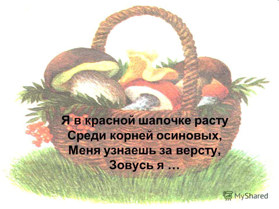 Я в красной шапочке расту Среди корней осиновых, Меня узнаешь за версту, Зовусь я …