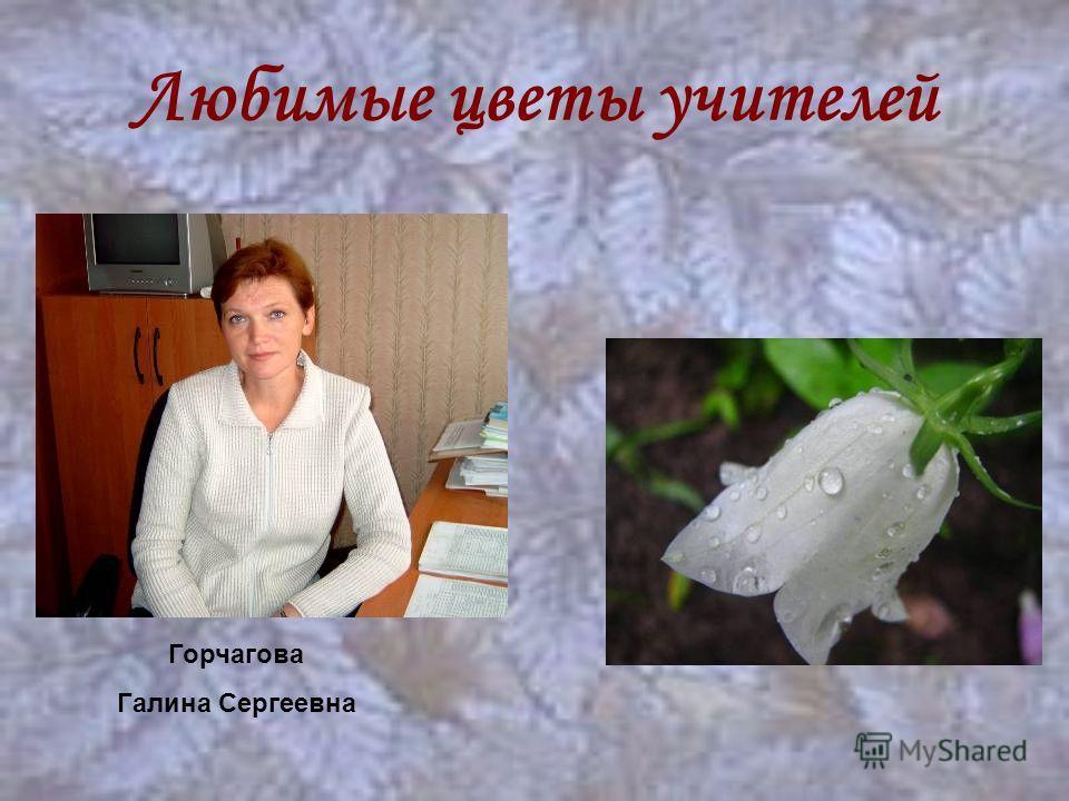 Любимые цветы учителей Горчагова Галина Сергеевна