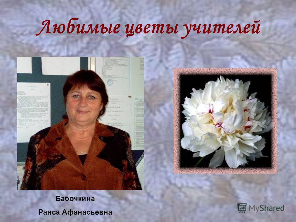 Любимые цветы учителей Бабочкина Раиса Афанасьевна