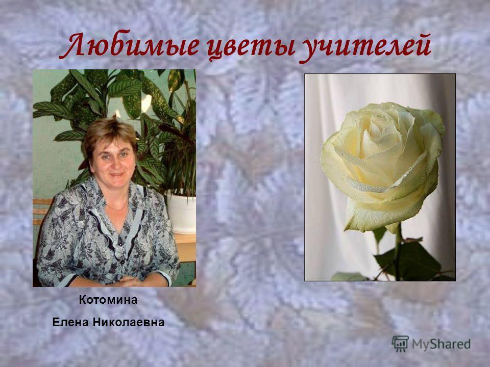 Любимые цветы учителей Котомина Елена Николаевна