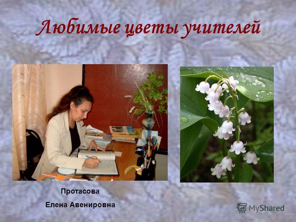 Любимые цветы учителей Протасова Елена Авенировна