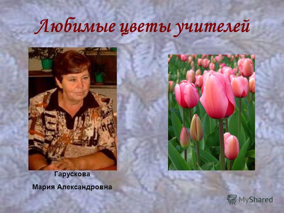 Любимые цветы учителей Гарускова Мария Александровна