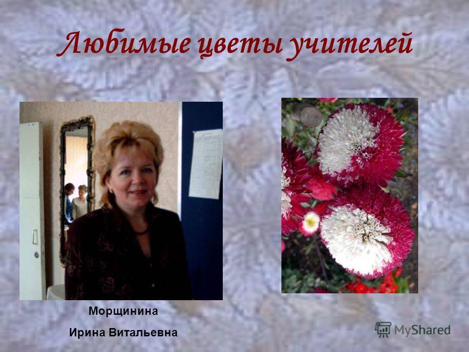Любимые цветы учителей Морщинина Ирина Витальевна