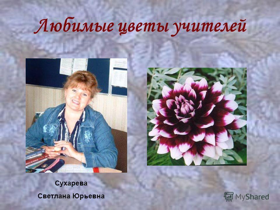 Любимые цветы учителей Сухарева Светлана Юрьевна