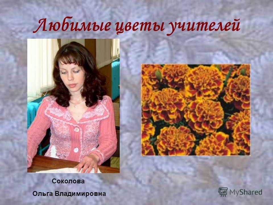 Любимые цветы учителей Соколова Ольга Владимировна