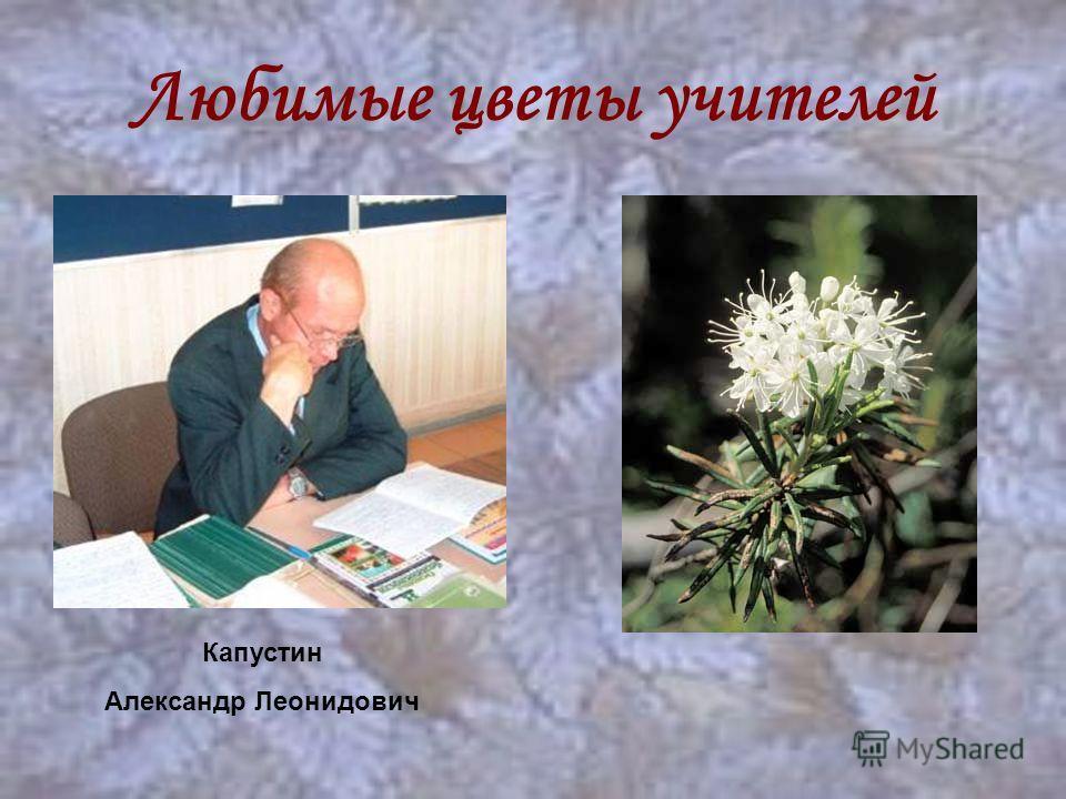 Любимые цветы учителей Капустин Александр Леонидович