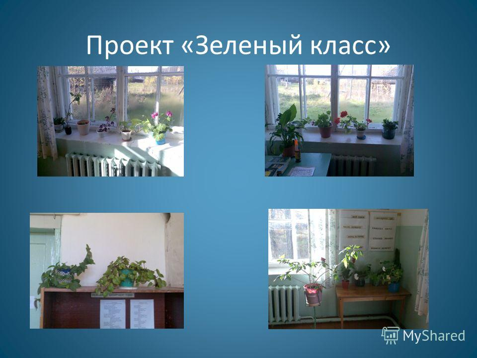 Проект «Зеленый класс»