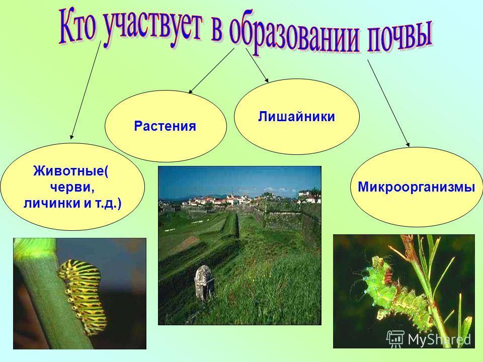 Растения Животные( черви, личинки и т.д.) Лишайники Микроорганизмы