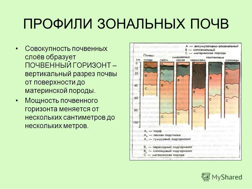 ПРОФИЛИ ЗОНАЛЬНЫХ ПОЧВ Совокупность почвенных слоёв образует ПОЧВЕННЫЙ ГОРИЗОНТ – вертикальный разрез почвы от поверхности до материнской породы. Мощность почвенного горизонта меняется от нескольких сантиметров до нескольких метров.
