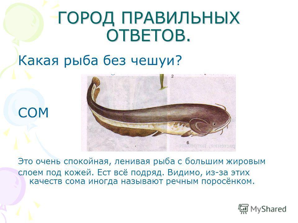 ГОРОД ПРАВИЛЬНЫХ ОТВЕТОВ. Какая рыба без чешуи? СОМ Это очень спокойная, ленивая рыба с большим жировым слоем под кожей. Ест всё подряд. Видимо, из-за этих качеств сома иногда называют речным поросёнком.