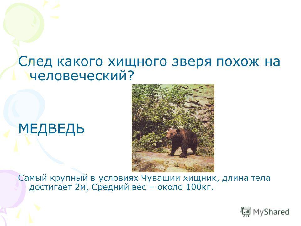 След какого хищного зверя похож на человеческий? МЕДВЕДЬ Самый крупный в условиях Чувашии хищник, длина тела достигает 2м, Средний вес – около 100кг.