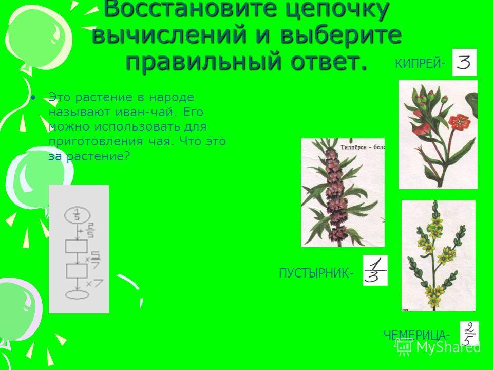 Восстановите цепочку вычислений и выберите правильный ответ. Это растение в народе называют иван-чай. Его можно использовать для приготовления чая. Что это за растение? КИПРЕЙ- ПУСТЫРНИК- ЧЕМЕРИЦА-