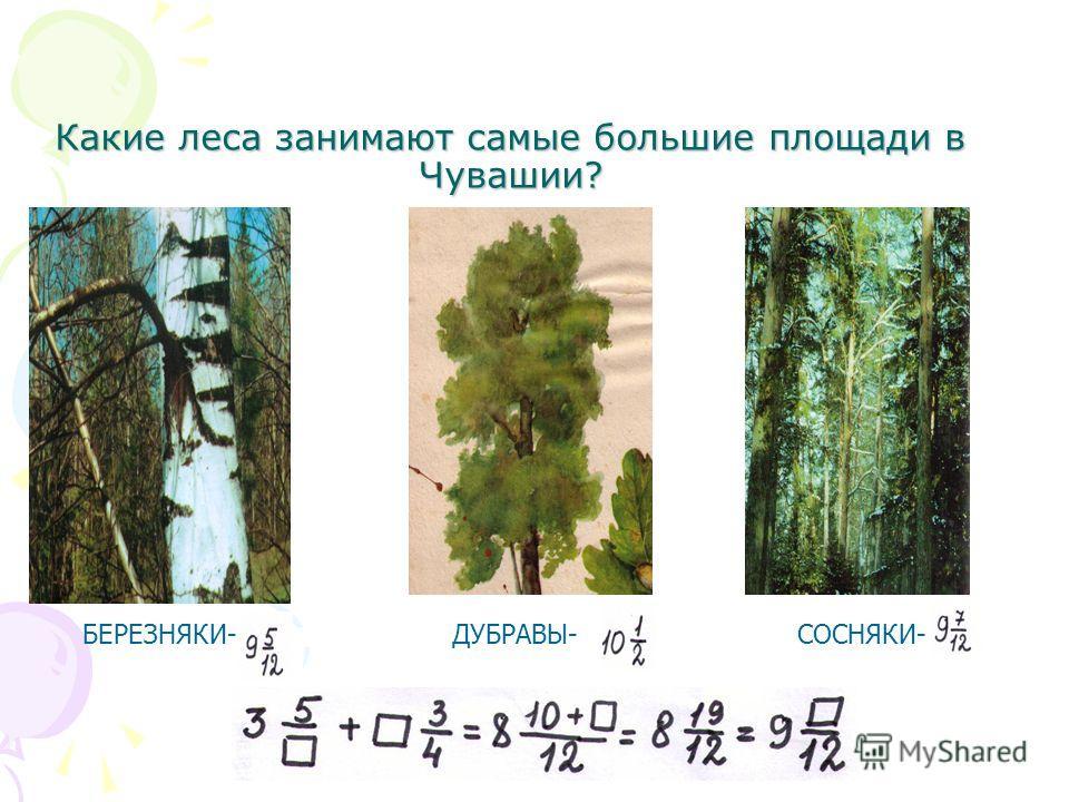 Какие леса занимают самые большие площади в Чувашии? БЕРЕЗНЯКИ-СОСНЯКИ-ДУБРАВЫ-