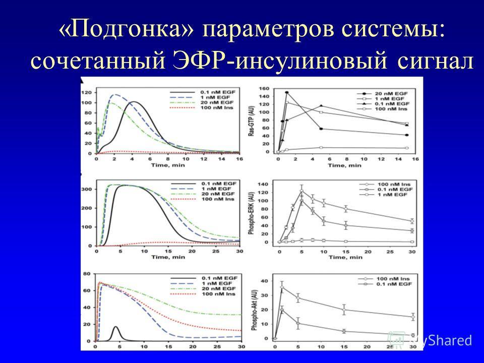 «Подгонка» параметров системы: сочетанный ЭФР-инсулиновый сигнал